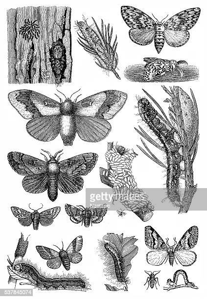 Harmful forest insects