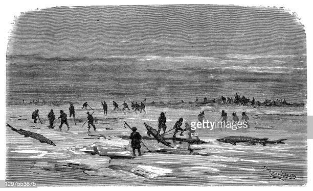 harpooning sturgeons under the ice - sturgeon fish stock illustrations