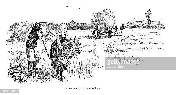 Harvest in Finistère