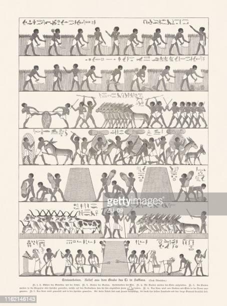 illustrations, cliparts, dessins animés et icônes de récolte, relief antique, saqqara, egypte, gravure sur bois, publié en 1879 - hiéroglyphe