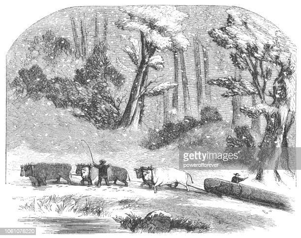 Hauling Logs in Penobscot County, Maine, USA (19th Century)