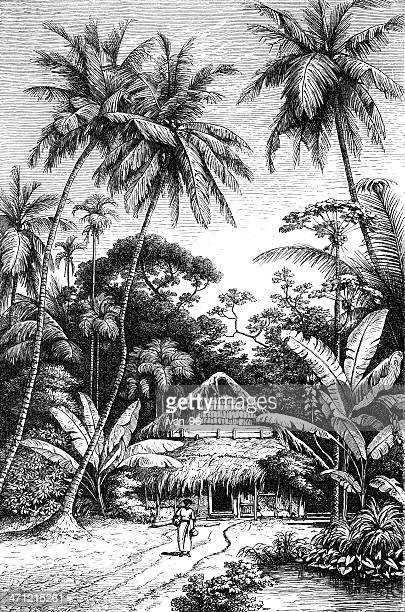 hawaii - coconut palm tree stock illustrations, clip art, cartoons, & icons
