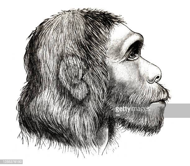 head of the neanderthal man, side view - neanderthal stock illustrations