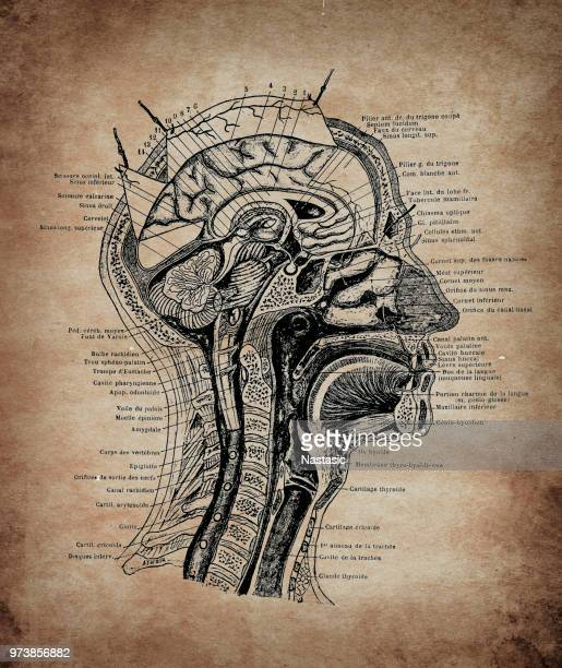 head section - neurosurgery stock illustrations, clip art, cartoons, & icons