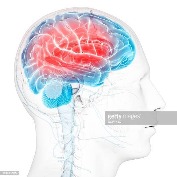 ilustraciones, imágenes clip art, dibujos animados e iconos de stock de headache, conceptual artwork - dolor de cabeza