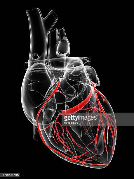 Healthy heart, artwork