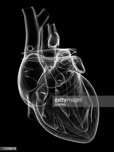 healthy heart, artwork - biomedical illustration stock illustrations