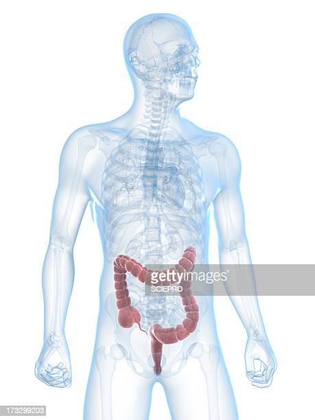 healthy large intestine, artwork - waist up stock illustrations, clip art, cartoons, & icons