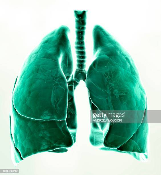 healthy lungs, artwork - lung stock illustrations