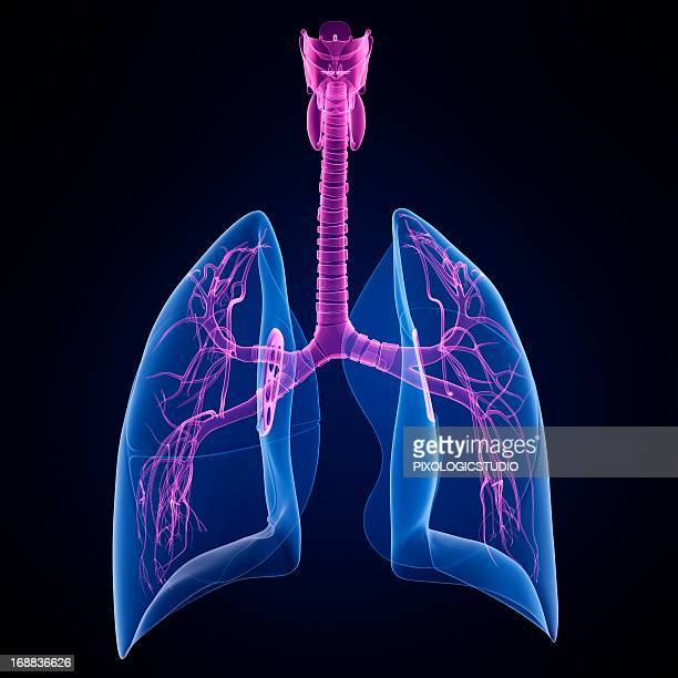 healthy lungs, artwork - inhaling stock illustrations