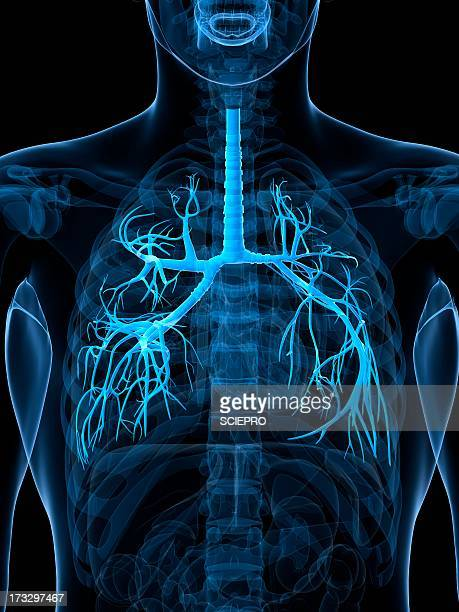 healthy lungs, artwork - translucent stock illustrations