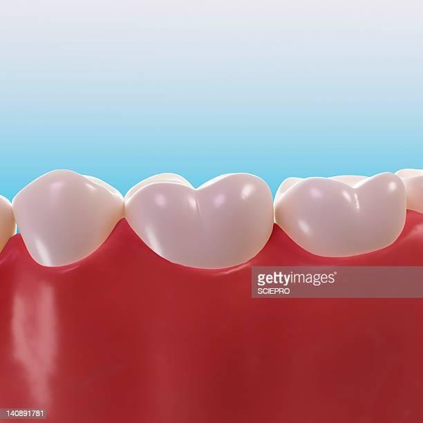healthy teeth, artwork - close up stock illustrations