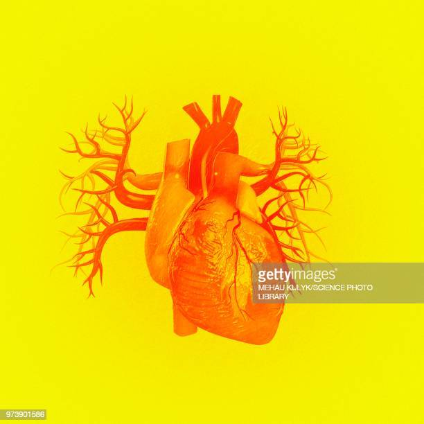 heart against yellow background, illustration - human internal organ stock illustrations