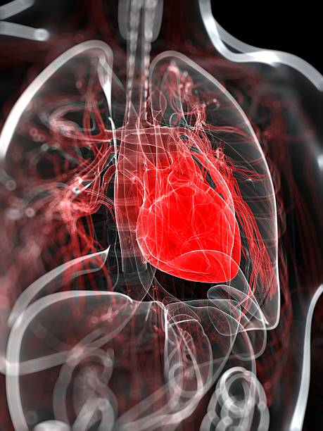 Heart Anatomy, Artwork Wall Art