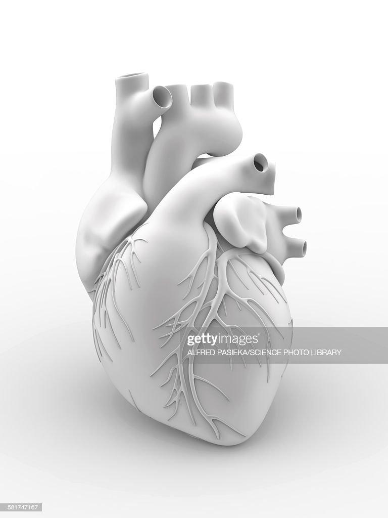 Heart and coronary arteries, artwork : stock illustration