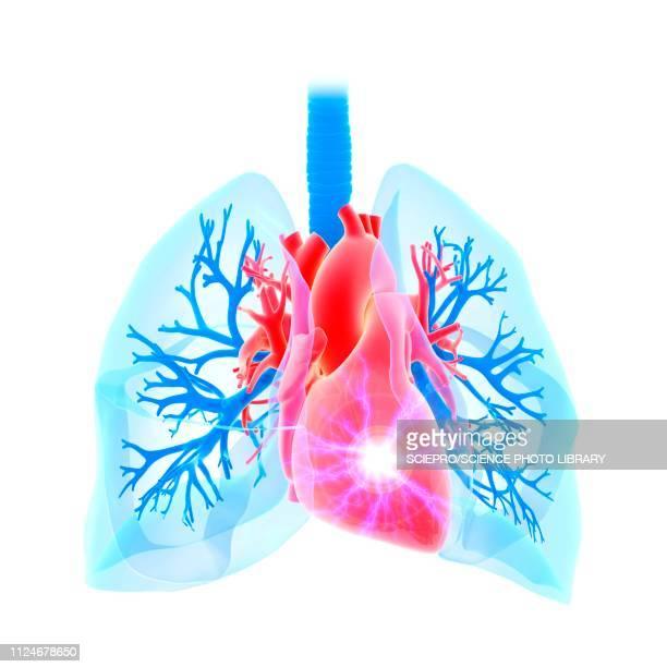 heart attack, conceptual illustration - respiratory system stock illustrations, clip art, cartoons, & icons
