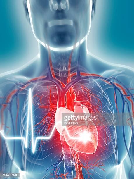 heart beat, artwork - human heart beating stock illustrations