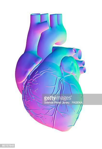 illustrations, cliparts, dessins animés et icônes de heart, computer artwork - coeur humain