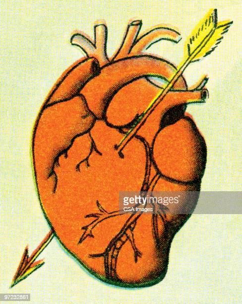 stockillustraties, clipart, cartoons en iconen met heart - cupidon