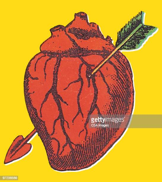 heart - human heart stock illustrations