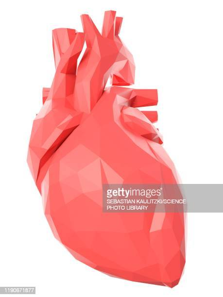 heart, illustration - anatomy stock illustrations