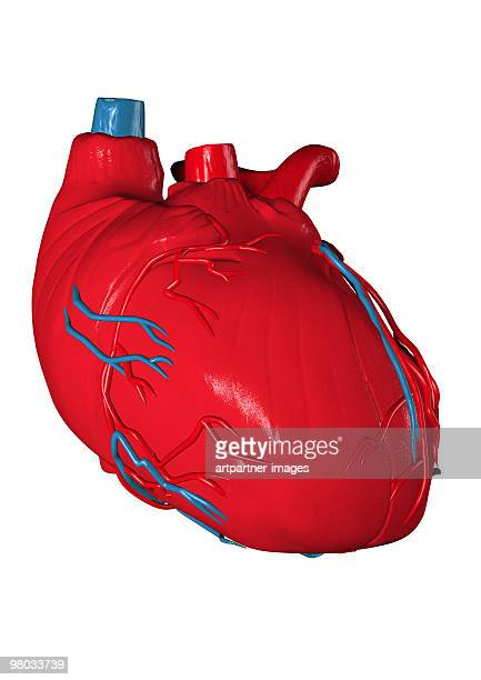 (human) heart in a biomedical illustration - physiology stock illustrations