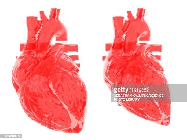 heart in diastole and systole, illustration - transparent stock illustrations