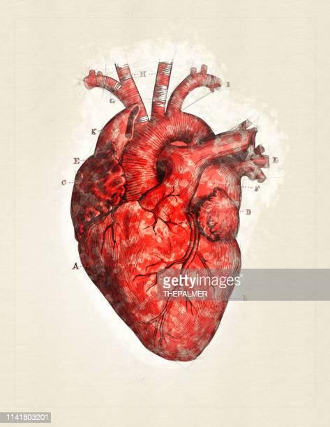 illustrations, cliparts, dessins animés et icônes de coeur-technique numérique mixte - organe interne humain