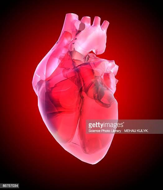 illustrations, cliparts, dessins animés et icônes de heart of glass against red background - coeur humain