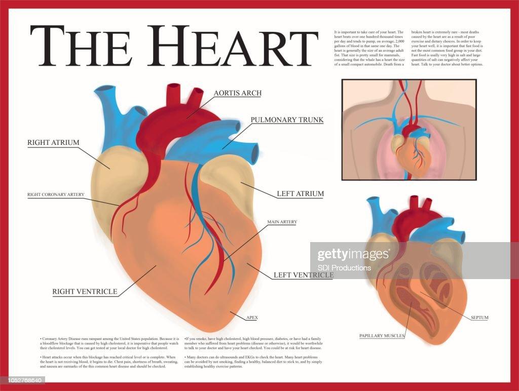 Cartaz de coração : Ilustração
