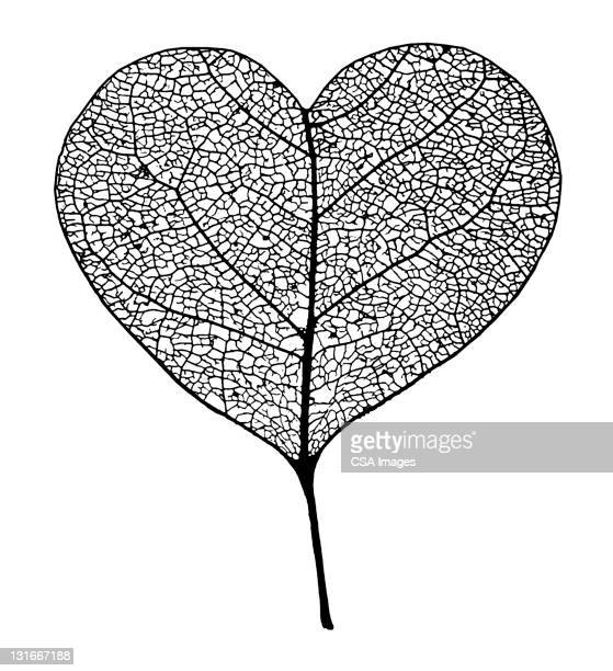 illustrazioni stock, clip art, cartoni animati e icone di tendenza di heart shape leaf - affettuoso