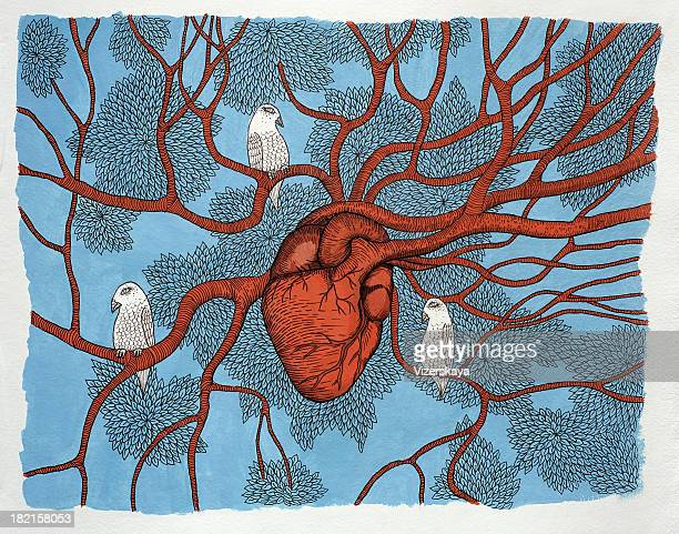 illustrations, cliparts, dessins animés et icônes de arbre de cœur - organe interne humain