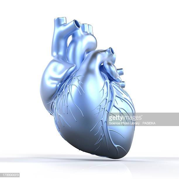 heart with coronary vessels, artwork - coronary artery stock illustrations, clip art, cartoons, & icons