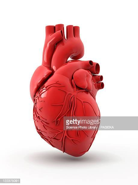 heart with coronary vessels - digitally generated image stock illustrations