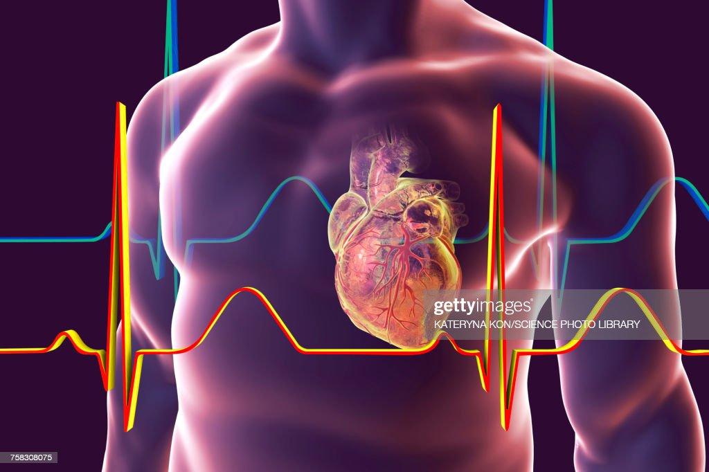 Heart with coronary vessels, illustration : Ilustración de stock