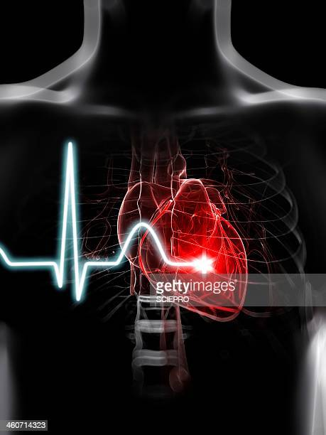 heartbeat, artwork - chest torso stock illustrations, clip art, cartoons, & icons