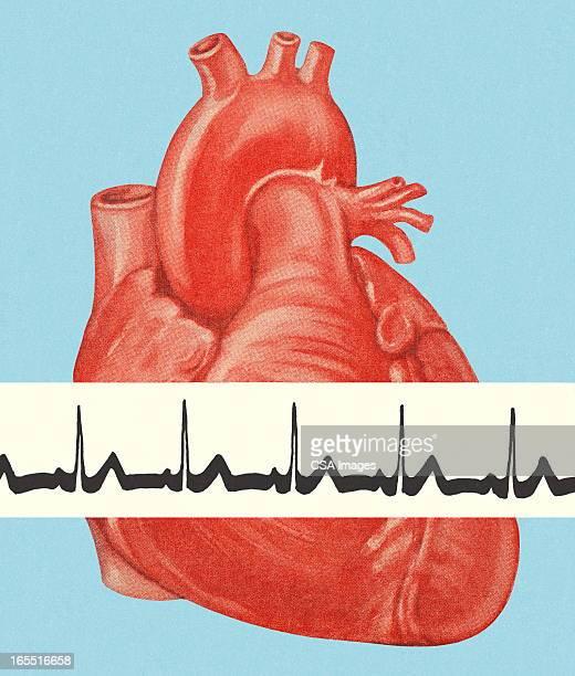 heartbeat - human heart beating stock illustrations