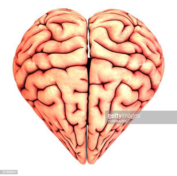 ilustraciones, imágenes clip art, dibujos animados e iconos de stock de heart-shaped brain, conceptual artwork - cerebro humano