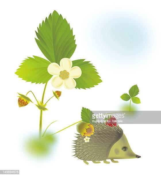 ilustraciones, imágenes clip art, dibujos animados e iconos de stock de hedgehog - animal vertebrado
