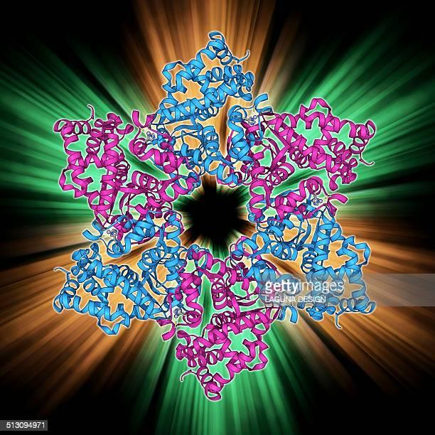 dna helicase molecule - proto oncogene stock illustrations
