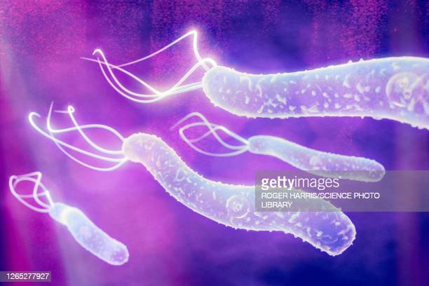 helicobacter pylori bacteria, illustration - stomach ulcer stock illustrations
