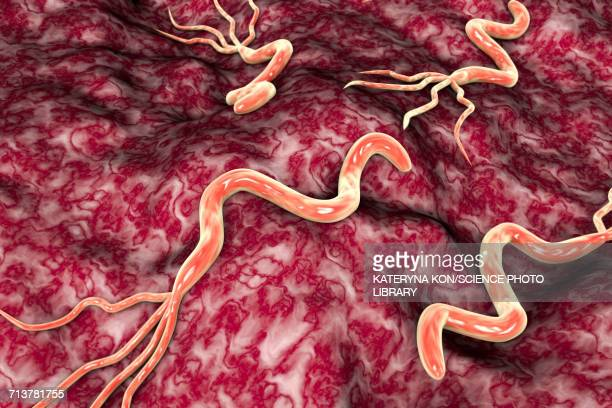 helicobacter pylori bacteria, illustration - ulcer stock illustrations