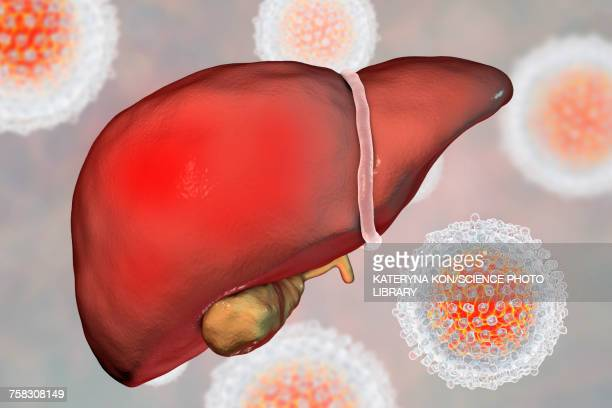 hepatitis c, illustration - human liver stock illustrations, clip art, cartoons, & icons