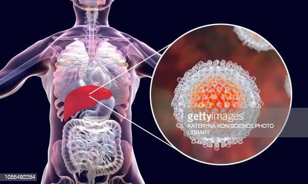 hepatitis c infection, illustration - hepatitis virus stock illustrations