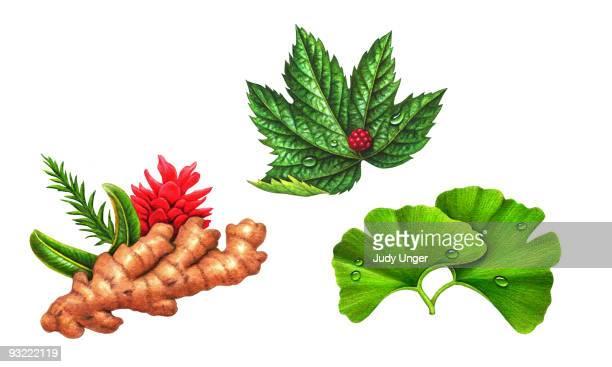 Herbs-Ginger, Ginko, Goldenseal