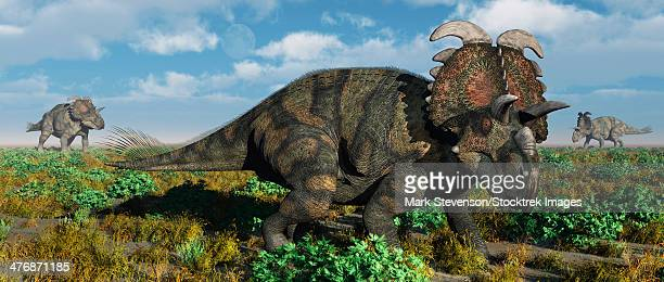 A herd of Albertaceratops from the Cretaceous Period.