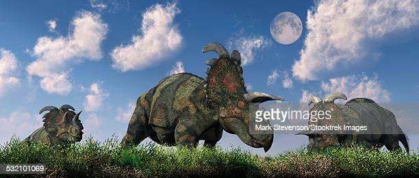 ilustraciones, imágenes clip art, dibujos animados e iconos de stock de a herd of albertaceratops grazing on a cretaceous landscape. - paleozoología