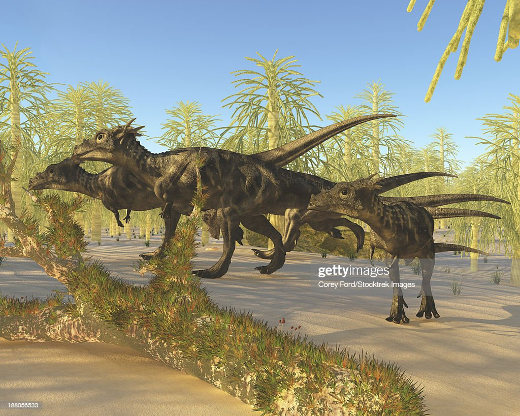 A herd of Dracorex dinosaurs walk through a carboniferous forest in the Cretaceous Era. : stock illustration