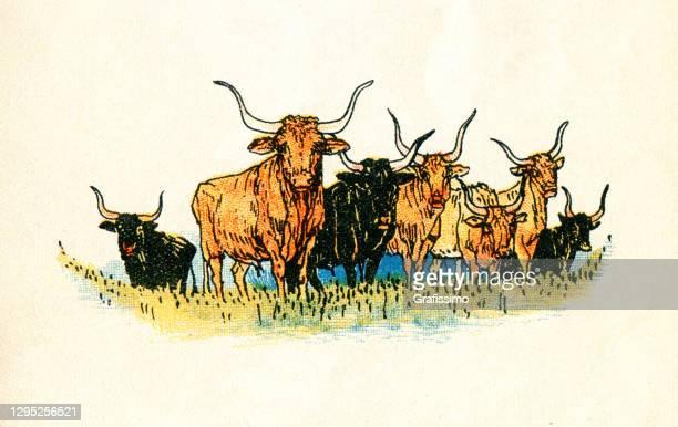 herd of longhorn cows at meadow - texas longhorns stock illustrations