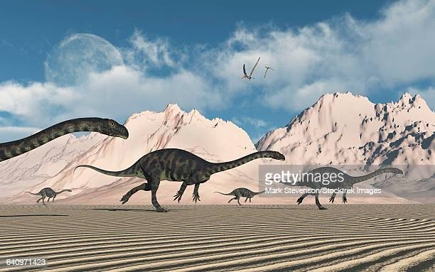 ilustraciones, imágenes clip art, dibujos animados e iconos de stock de a herd of massospondylus dinosaurs crossing a desert. - paleozoología